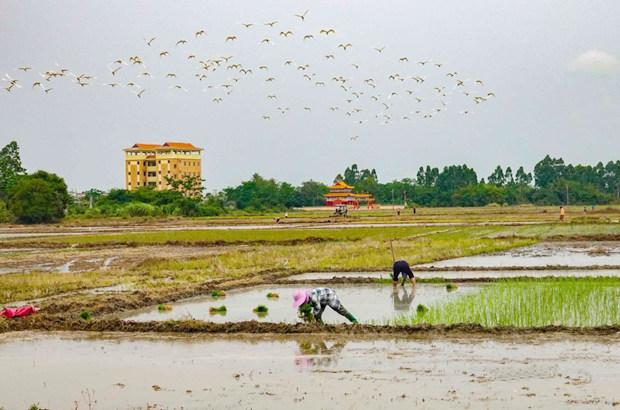 组图丨春分将至 儋州长坡洋鸟儿翩翩舞 伴农春耕忙