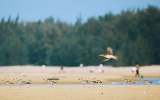 拍客 | 自然之美!海南儋州有个光村银滩湿地,快去打卡!