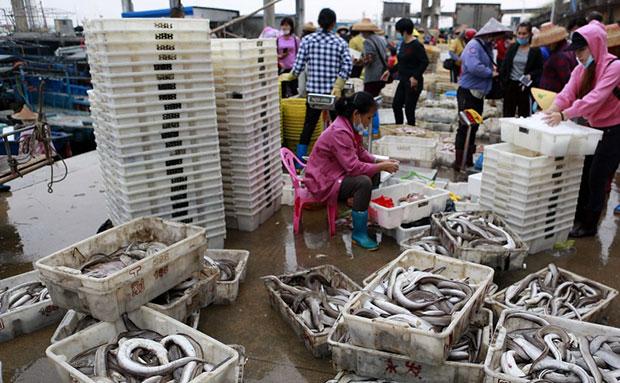原创组图   儋州白马井中心渔港:渔业复工 鱼市热闹